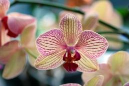curare-orchidee
